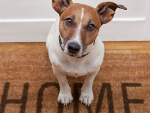Selling Your Home When You Have Pets – Five Top Tips